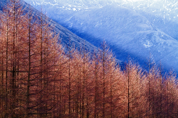 Tree Line, Lochan Urr, Glen Etive (photograph copyright 2011 Arthur Marshall)