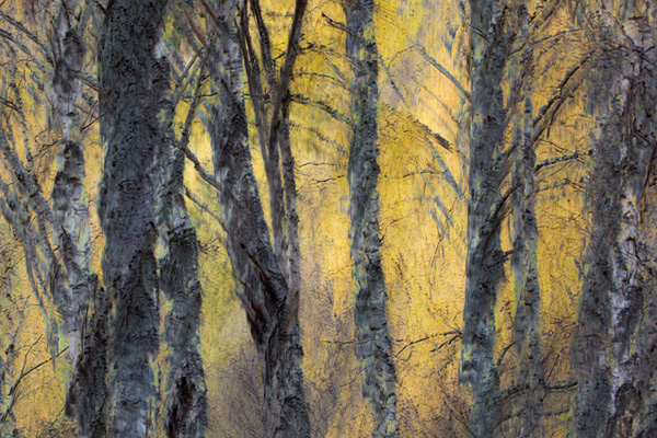 Golden, Craigellachie Reserve (photograph copyright 2016 Arthur D. Marshall)
