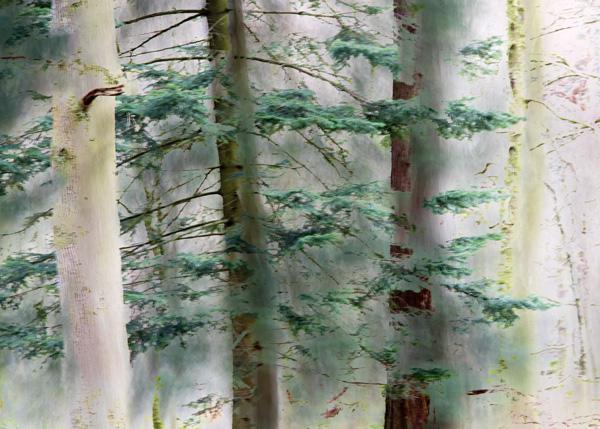 Manesty Trees (photograph copyright 2016 Arthur D. Marshall)