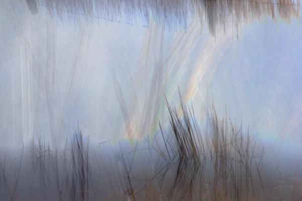 Grass (photograph copyright 2016 Arthur D. Marshall)